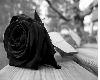 Cuadro Rosa Negra