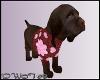 D- Nutella Labrador Hear