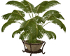 Potted Palm Resizable