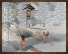 Winter Hot Springs