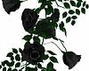 ⛧ Hanging Black Roses