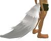 wolfs tail white