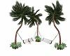 palm tree swings