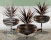 TR 3 Vase Plant
