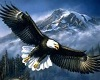 Flying Eagle Oval Rug