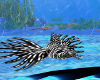 Lovii Fish