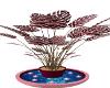 $A$ PINK ZEBRA PLANT