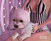 Iv•Dog Sit