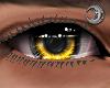 Golden King Eyes