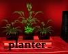 rowdy r planter n plants