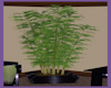 ~SD~ BAMBOO PLANT