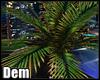 !D! CITY Palm