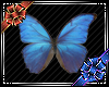 [C] Butterfly Animated
