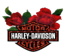 HW: Harley and Roses