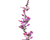 Pink/prple flwr vine