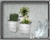 SALON  PLANTS