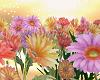 Spring  Daisy Field