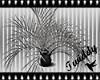 Silver Dracaena Plant