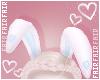 F. Bunny Ears B