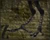 Harpy legs (Aello)