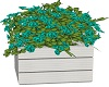 Planter Box with Teal
