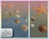 * Sea shells