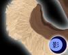 Earth Husky Tail