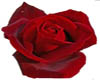 Red sparkle rose