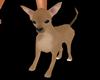 My Murphy Puppy