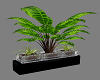 MJ Plant