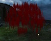 Red Fall Willow