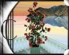.:C:. Capri plant1