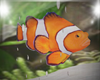Gold Fish For Tank *REQ