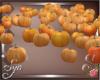 $$ Pumpkin Patch