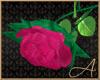 Long Stem Rose Blush