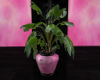 [AM] Potted Plant 1