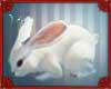 (IS) Conejo