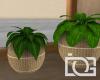 DG* Vacancy Plants