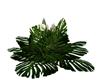 plant~ large exotic fern