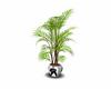 elvis plant 2