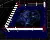 wolf boxing ring