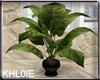 K cafe green plant