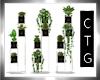 CTG   INDOOR PLANTS