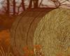 September Hay Bale