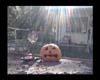 PumpkinPoster SR Rainbow