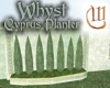 Whyst Cyprus Planter