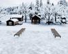 Winter In The Aspens