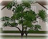 [Luv] Tree