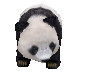 Animated Panda
