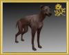 Greyhound Pet